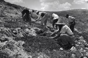 gilboa_planting_1960_moshe_shriki_600-400